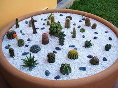 Vivero Cactus | Diseños Jardin