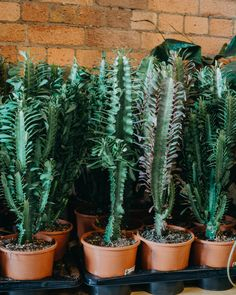 rows of cactus at Bergamotte pop up Bristol Pop Up, Visit Bristol, Paradise Plant, Travel Design, Cactus Plants, House Plants, Lifestyle, Simple, Blog