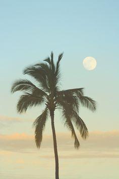 Full Moon & Palm