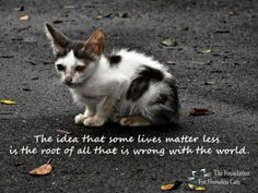The idea that some lives matter less -is the root of all that is wrong with the world.