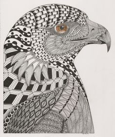 Eagle  - template Ben Kwok- Adri