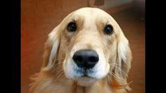 Dog speaks for the Doggie Bag Cafe