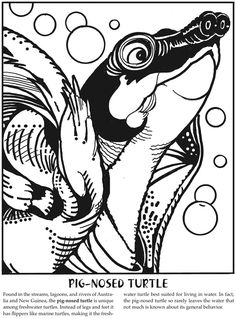 Monster Reptiles: A Close-Up Coloring Book Dover Publications