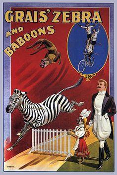 'Grais' Zebra and Baboons'