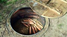 In einem Erdkeller liegen Mohrrüben, daneben eine Abdeckung aus Holz