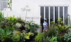 乙庭 店舗前の植栽模様替え PHOTOシューティング – ACID NATURE 乙庭