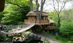 caddo lake tree house - Google Search
