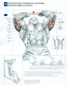 Best triceps workouts for mass and definition - Bodybuilding Wokouts for You - Healthy Life 7 Workout, Triceps Workout, Gym Workouts, Workout Fitness, Sport Fitness, Muscle Fitness, Fitness Bodybuilding, Academia Fitness, Muscle Anatomy