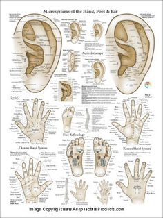 Chinese Korean Hand Therapy Acupuncture 18 X 24