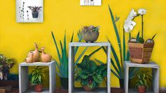 Tips & Tricks : Taman di Halaman Minimalis Ladder Decor, Planter Pots, Projects To Try, Tips, House, Ideas, Home Decor, Home, Haus