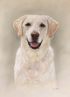 Portraits of pets in oil and pastel by Lisa Ober