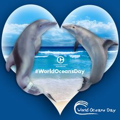 Happy #WorldOceansDay from Winter, Hope and Clearwater Marine Aquarium!