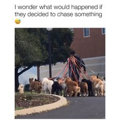 Just walking two dogs together is enough chaos for me 👀 Video by TikTok/alisongipp 🎥 Funny Animal Jokes, Funny Dog Memes, Funny Dog Videos, Animal Memes, Cute Funny Dogs, Cute Funny Animals, Cute Animal Videos, Cute Animal Pictures, Cute Dogs And Puppies