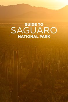 Experience the beauty of the Sonoran Desert at Saguaro National Park - 10 Things to Do in Saguaro National Park Tucson AZ.