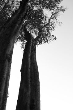 whereness:  tower © 2014 Kendra Zvonik/wherenessAll Rights Reserved. -repinned by California photographer http://LinneaLenkus.com  #photography
