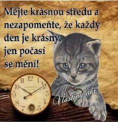 Night, Cats, Animals, Gatos, Animales, Animaux, Animal, Cat, Animais