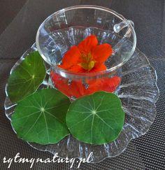 Nasturcja kojarzy się głównie z kwiatem ozdobnym i tak jest, jednak oprócz walorów estetycznych wykazuje niesamowite właściwości lecznicze!  #rytmynatury #nasturcja #antybiotyk #łupież #kwiat #ogród