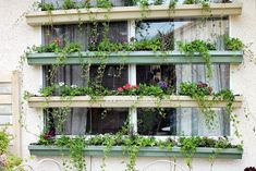 Grow a living window shade that couldn't be lovelier.