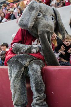 """Alabama mascot """"Big Al"""""""