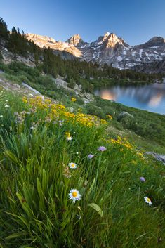 Rae Lakes Wildflowers, Kings Canyon National Park, California. Sierra Nevada mountains