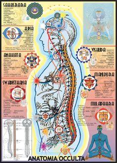 corpo umano e chakra