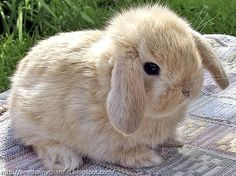 Cute and funny pictures of animals 44. Bunny 4.