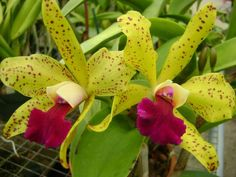 """Paradise Orchids, Inc. go to their Facebook page and """"like"""" them :-)"""