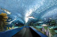 This super-awesome-cool water tunnel infested with sharks (!) can be found in Ripley's Aquarium in Myrtle Beach, South Carolina. We all thoroughly enjoyed the whole aquarium but were especially enthralled with the water tunnel (as I call it!).  We were even able to pet horseshoe crabs : )