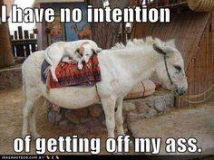 Yep Animal Puns, Funny Animal Memes, Dog Memes, Funny Animals, Cute Animals, Funny Memes, Animal Funnies, Crazy Animals, Animal Antics