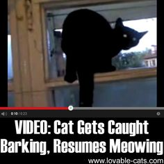 Lovable Cats VIDEO: Cat Gets Caught Barking, Resumes Meowing - Lovable Cats Funny Dog Videos, Funny Dog Pictures, Funny Dogs, Funny Animals, Cute Animals, Crazy Cat Lady, Crazy Cats, Cat Toilet Training, Cat Gif
