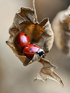 Art Lady bugs adorable-amazing-animals-and-insects Beautiful Bugs, Amazing Nature, Beautiful World, Beautiful Creatures, Animals Beautiful, Cute Animals, A Bug's Life, Tier Fotos, Fauna