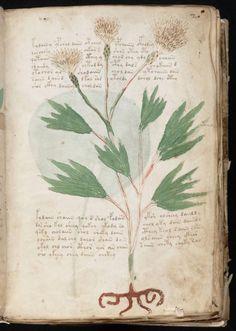 The Voynich Manuscript - Full color PDF