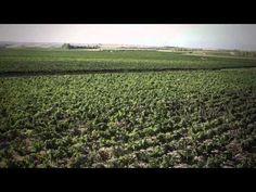 Argiolas Video... featuring Sardegna...