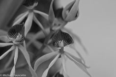 Taken in Belize - black Orchid's are the national flower
