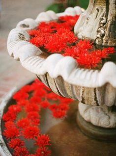 Flowers in fountain