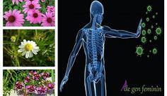 Plante care cresc imunitatea - www.degenfeminin.ro