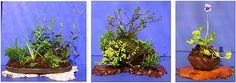 Kusamono gallery | Kusamono/Shitakusa: Participants choose a pot and 3 plants including ...