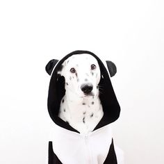 Pet friendly friday is our favorite day and today @olgavang is our star!!! #toystyle #pff #dog