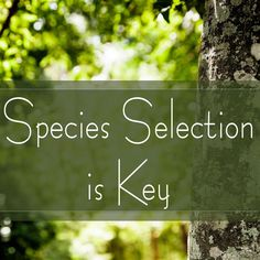 "'Right Tree, Right Place' has been around for decades. What does it really mean? What tree should I plant in my yard? Find out in this Trees Are Key episode ""Species Selection is Key."" Species Spotlight: American smoketree is a beautiful, small, native tree that isn't used often, but it is well adapted to the tough conditions we find in our towns and cities. Listen to this week's episode to find out more about this unique tree."