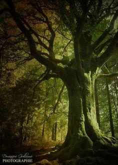 Forêt de Brocéliande, Bretagne, France