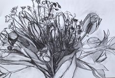 Mother's Day Tulip Study, vine charcoal on paper, 2015, spring