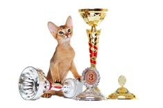 What is it called when a cat wins a dog show? A Cat-Has-Trophy!