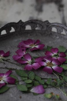 可憐な一重のバラなのにの画像 | 美的な押し花カリグラフィー花生活