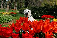 Ditte in a park full of beautiful spring flowers | Flickr - Photo Sharing!