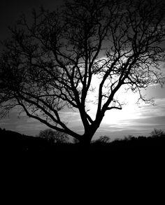 tree.life