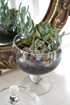 Gorgeous 20+ Wine Glass Succulent Garden Ideas https://gardenmagz.com/20-wine-glass-succulent-garden-ideas/