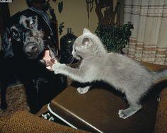 Kutya macska barátság!