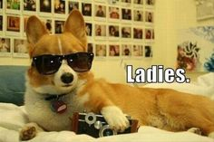 30 Animals Who Know They're Awesome!