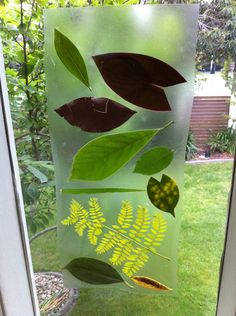 Contacted leaves make great discussions and develops observational skills.