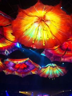 Colorful umbrella looking exotic flowers